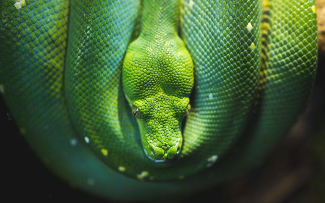 Schlangenöl gegen Haarausfall – Yılan Yağı – wo kaufen? wie anwenden?